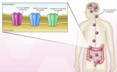The GI tract has the greatest number of opioid receptors outside the CNS.