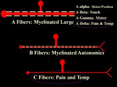 •Need to know A-beta only carries touch, and A-delta only carries pain and temp (quickly). •C fibers – slow, diffuse, highly aversive pain (biggest problem for pain doctors)
