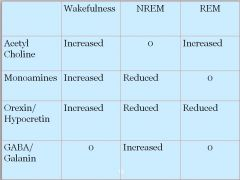 •Acetylcholine increased •Monoamines increased •Orexin/Hypocretin increased