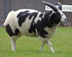Who am I?