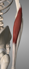 o: supracondylar ridge of humerus i: lateral distal radius a: flexes forearm at elbow (especially at mid-prone position)