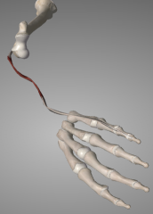 o: lateral epicondyle i: extensor expansion of 5th digit (pinky) a:           1) Primary extension at MCP 5 2) Secondary extension at interphalangeal joints of digit 5