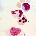 What are these cells?