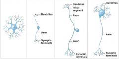 Name the Neuron