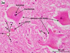 """Identify these cells """"?"""""""
