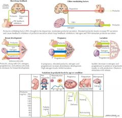 Prolactin synthesis and release by the anterior pituitary is mainly under tonic negative control by dopamine (prolactin inhibitory factor, PIF). Its major functions are in breast development, pregnancy, and lactation. Its levels are elevated during fetal