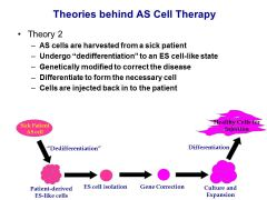 Theory 2 We haven't been able to do this yet in people with high success, although preliminary studies are underway (using spermatogonia, mesenchymal stem cells, etc.)  Immunogenicity Because this method uses patient derived cells, immunosuppressive t