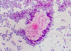 what does this cell indicate?