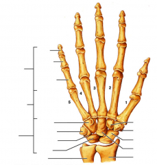 Nævn så mange af håndens knogler som muligt.