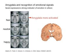 - amydala INC. activation with fear/anger in others (reading facial expressions)