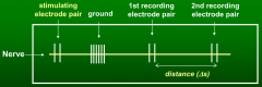 20 m/s  In this question, there are two pairs of recording electrodes, like in the drawing. So to find the distance Δs (on the figure), we need to subtract either 25 mm - 15 mm = 10 mm or 20 mm - 10 mm = 10 mm.  10 mm / 0.5 ms = 20 m/s