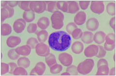 What is the cell in this slide? What is its function?