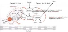 Man kan inddele energiproduktionen i 3 faser:  1. Fra polymer til monomer. Sker i tarmen  2. Fra Monomer til Acetyl-CoA. Sker ved glykolysen i cytoplasmaen eller i fedtsyreoxidation i mitochondierne. 3. Fra Acetyl-CoA til ATP. Oxidativ fosforylering i
