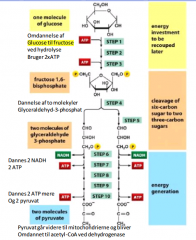 I glykolysen nedbrydes (oxideres) glucose under dannelse af ATP (uden ilt). Glykolysen sker i cytosolen i de fleste celler. Selvom der ikke er ilt tilstede oxideres glukosen stadig ved fjernelse af elektroner fra carbon. Elektronerne fjernes af  NAD+ -> N