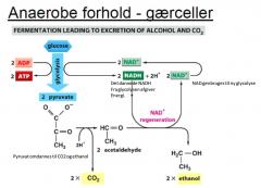 Når ikke der er ilt til stede, går pyruvat ikke ind i mitochondriet, men bliver i stedet reduceret under gæring, for at opretholde glycolysen. Gæring er en energigivende reaktion der sker under anaerobe forhold. Gæring gør det muligt at danne ATP uden O2.