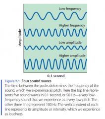 - Amplitude: intensiteit van een geluidsgolf - Luidheid: perceptie van de intensiteit - Frequentie: aantal Hertz per seconde - Pitch: toonhoogte