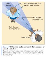 intensiteit tussen de oren.   Voor hoge frequenties met een golflengte korter dan de breedte van het hoofd, creëert het hoofd een geluidschaduw