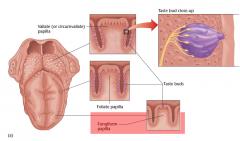 Fungiform papillae.  Dit is vooral genetisch bepaald, maar ook hormonaal