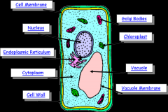 Identify the cell