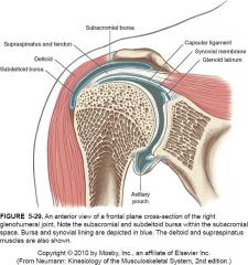 - Cause : C'est une douleur de l'éapule causé par un travail/sport où le bras est souvent levé au-dessus de la tête. Les tendons des muscles frottent anormalement dans l'espace entre l'acromion et la tête de l'humérus parce que la...