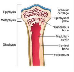 shaft of the long bone; cortical bone w/ medullary cavity