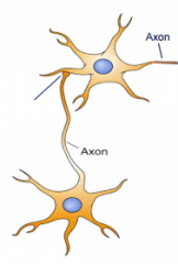 This shows synaptic transmission between neurons. What is the link between the axon of one neuron and dendrite of the other called?