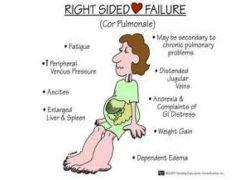 1 Cardiology Flashcards Cram Com