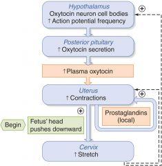 Parturition (Birth)