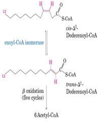 unsaturated lipids 1