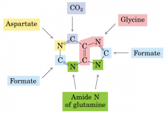 Folate roles in Purine and Pyrimidine synthesis