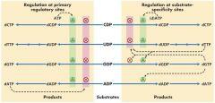 Adenosine deaminase deficiency ---- no C-T-G (lot of dATP feedback inh)