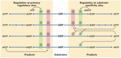 Purine nucleoside phosphorylase deficiency ------ no C-T (-TP) less severe only T