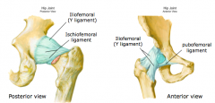 Ligaments of hip joint 1.iliofemoral ligament (Y ligament) – largest ligament of hip, anterior, resists extension (especially in standing) 2.pubofemoral ligament – anterior inferior – resists abduction 3.ischiofemoral ligament – posterior, also resi