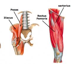 hip flexion a.iliopsoas b.rectus femoris c.sartorius