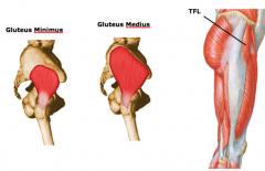 hip abduction a.gluteus minimus b.gluteus medius c.TFL (tensor fascia lata)