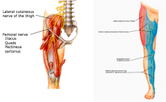 lateral femoral cutaneous a.sensory •supplies lateral thigh  femoral nerve a.enters thigh deep to inguinal ligament in femoral triangle b.motor •supplies the muscles of the quadriceps (rectus femoris, vastus lateralis, medialis & lateralis)and