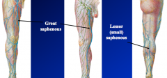 Veins a.Overview of venous drainage of lower extremity •The LE is drained via superficial and deep venous pathways that are also connected via a communicating venous system  Superficial veins  1.great saphenous vein a.ascends along medial leg (c