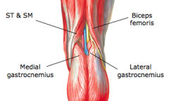 """Popliteal Fossa - """"Diamond-shaped depression of the posterior aspect of knee"""" A.Boundaries of the popliteal fossa (p 571) 1.Superolaterally – biceps femoris 2.Superomedially – semimembransosus and semitendinosus 3.Inferiorly – two heads of the gas"""