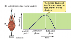 - tension developed is sufficient to move the load, and the muscle shortens