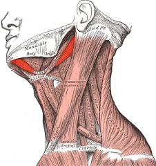 Body of mandible