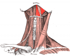 Mylohyoid line (at body of mandible)