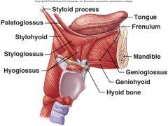 Inferior mental spine of mandible