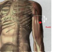 en la cara interna del brazo, 3 Tsun por debajo del extremo anterior del pliegue axilar, sobre el borde radial del m. bíceps braquial
