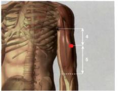 en la parte interna del brazo, 4 Tsun por debajo del extremo anterior del pliegue axilar o 5 Tsun por encima del pliegue articular del codo, sobre el borde radial del m. bíceps braquial