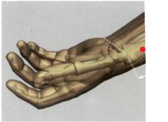 1,5 Tsun por encima del pliegue distal de flexión de la  articulación de la muñeca, en la depresión proximal de la  apófisis estiloides del radio, entre los tendones del m.  supinador largo y el m. abductor largo del pulgar