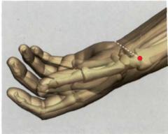 en el extremo radial del pliegue distal de flexión de la  articulación de la muñeca, por fuera de la a. radial, por  dentro del tendón del m. abductor largo del pulgar