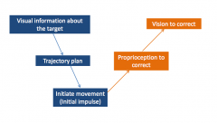Proprioception takes around 80 ms      Vision takes around150 ms