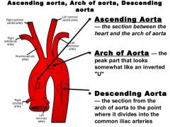 Origin: Formed from ascending Ao Branches: INOM, Lt Common Carotid, and Lt Subclavian  Terminates: Becomes Desending Aorta