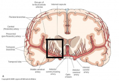 ntracerebral hemorrhages reflect rupture of intraparenchymal branches of subarachnoid arteries, such as the lenticulostriate arteries (indicated by black box), which branch from the middle cerebral artery, supplying the internal capsule and basal ganglia.