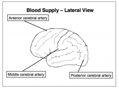 - e.g. Occlusion of the left middle cerebral artery often yields language deficits, as this artery normally supplies cortical regions subserving verbal and literal elements of speech